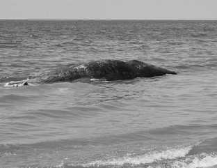 balena-bagnara